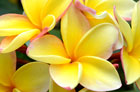 enchanting floral gardens maui
