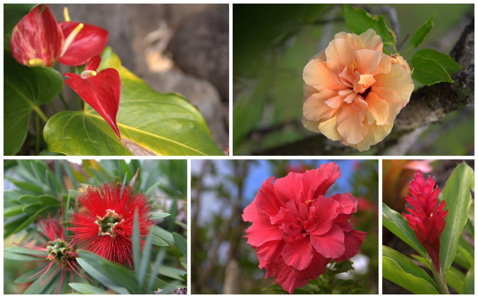 Sunset Ranch Botanicals